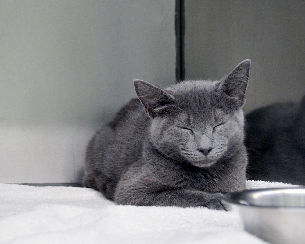 Veterinary Care for Cats Including Preventative Wellness Care